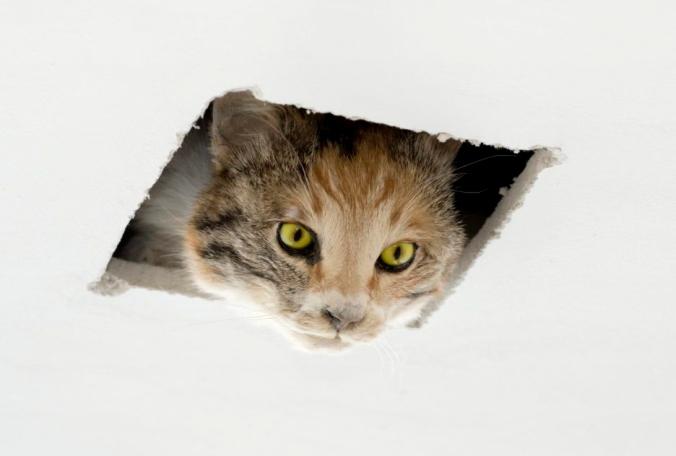 ceiling-cat.jpg
